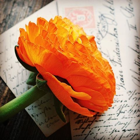 Do you have cherished hand written letters from your ancestors?hellip