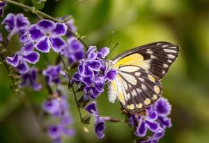 butterfly-593937_1280