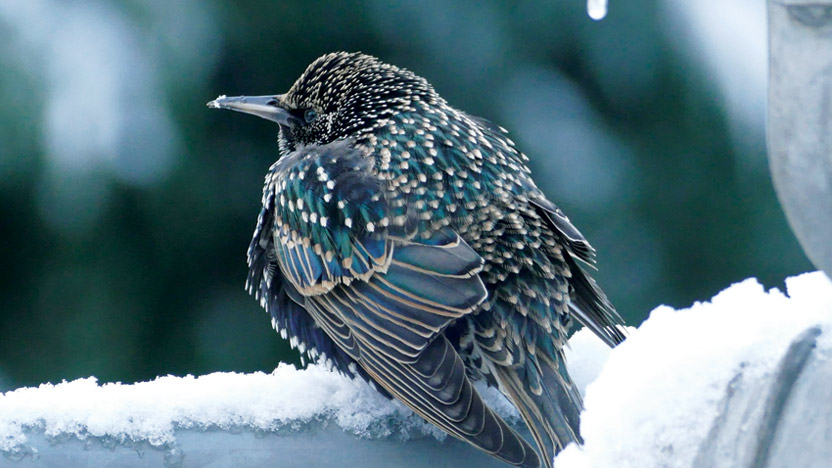 winter-bird